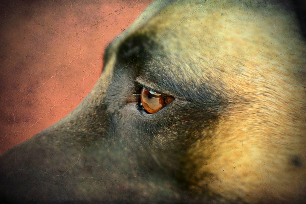 perros de seguridad y guarda