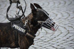 perro de intervención policial