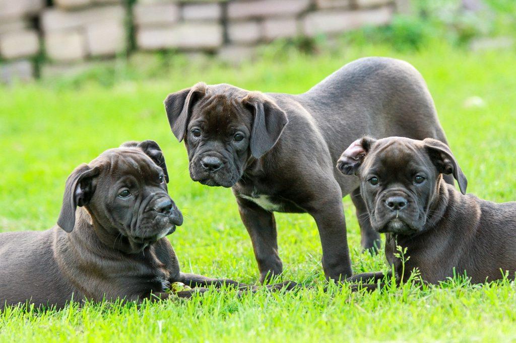 Los cachorros , la etapa vital para socializar