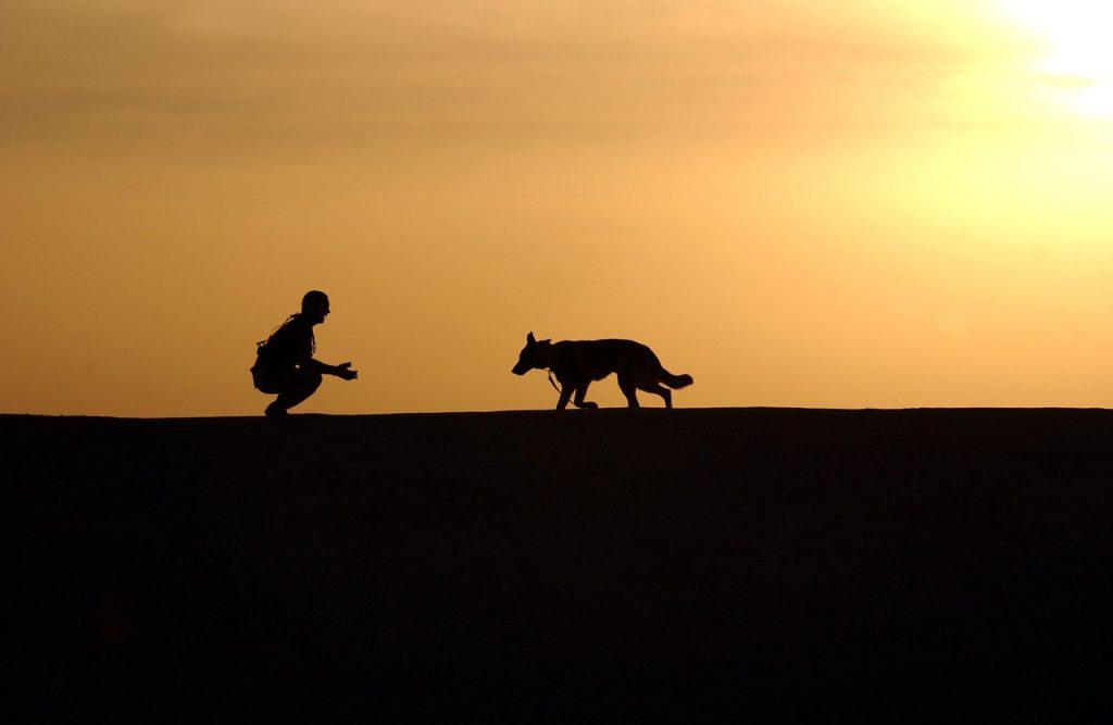 Nuestra forma de trabajar andalucia canina