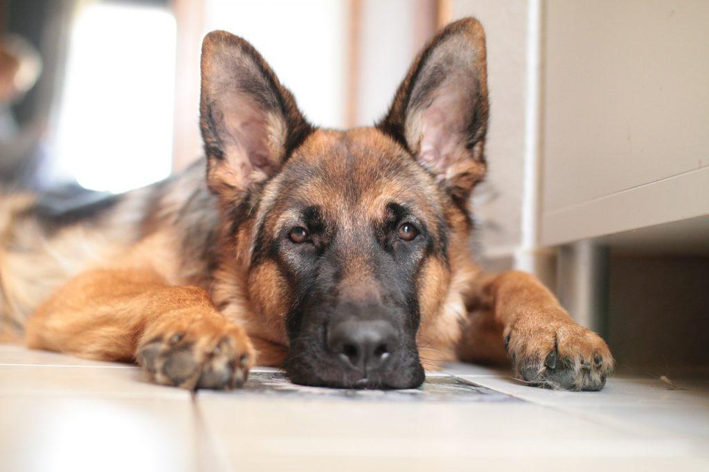 Mi perro hace sus necesidades dentro de casa. Como puedo solucionarlo?